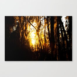 touched by the sun Canvas Print