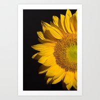 sunflower Art Prints featuring sunflower by mark ashkenazi