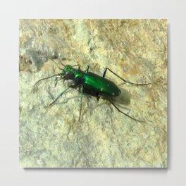 Watercolor Beetle, Six-spotted Tiger Beetle 04, Eno River, North Carolina Metal Print