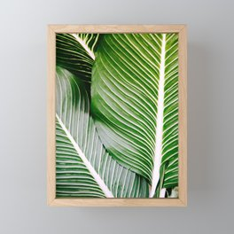 Big Leaves - Tropical Nature Photography Framed Mini Art Print