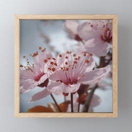Finally Spring! ~ Pink Cherry Blossom Framed Mini Art Print