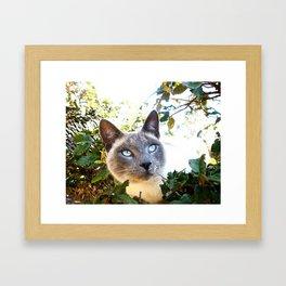 Siamese Cat in Tree Framed Art Print