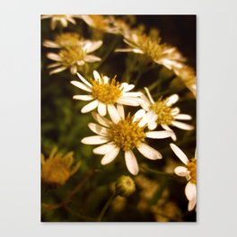 Ode to Daisies Canvas Print
