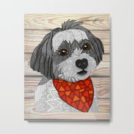 Max the Havanese Metal Print