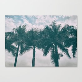 Palm Trees in tropical climate Canvas Print