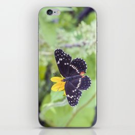 Bordered Patch Butterfly by Murray Bolesta iPhone Skin