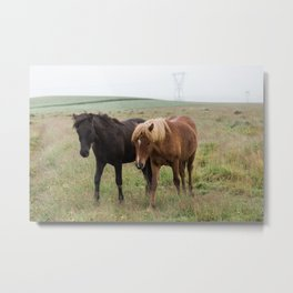 Icelandic horses - nature photography Metal Print