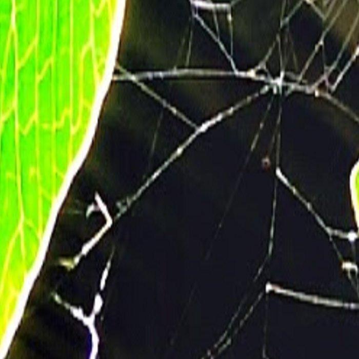 Web of Holes Leggings