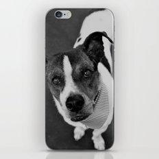 hello doggie iPhone & iPod Skin