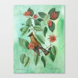 Bohemian Waxwing with Carolina Allspice, Antique Natural History Collage Canvas Print