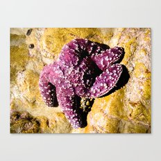 Purple Star Canvas Print