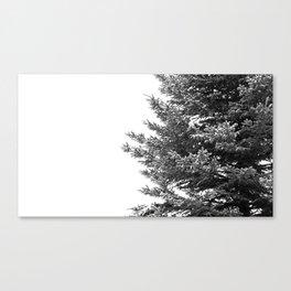 B&W Spruce Branches Canvas Print