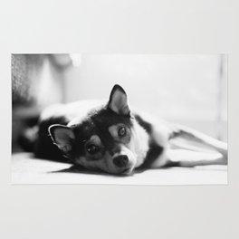 Shiba laying Rug
