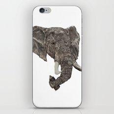 Street Elephant iPhone & iPod Skin