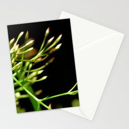 Pink Jasmine Buds Stationery Cards