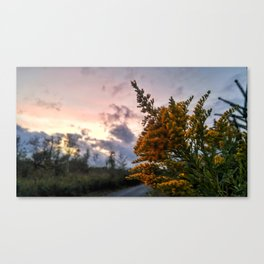 Look from a different angle Canvas Print