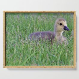 Gorgeous Gosling by Reay of Light Serving Tray