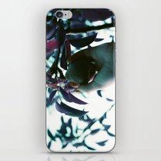 Backyard Pear iPhone & iPod Skin