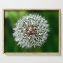 Fine Art Dandelion Seeds Close-Up Serving Tray