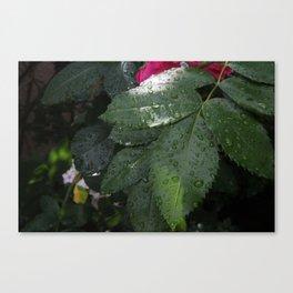Hidden Treasure Canvas Print