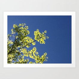 Interrupted Sky Art Print