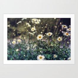 Daisy II Art Print