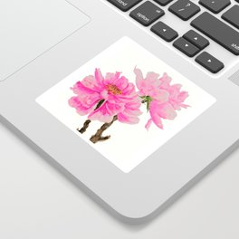 two pink peonies watercolor Sticker