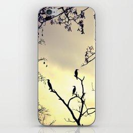 Cormorants at sunset iPhone Skin