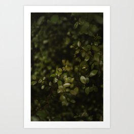 Maidenhair Vine Plant Printable Wall Art   Floral Flower Botanical Nature Outdoors Macro Photography Print Art Print