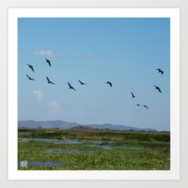 Is time to fly Art Print