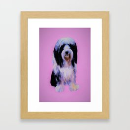 Bearded collie on pink Framed Art Print