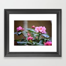 Pretty in Pink2 Framed Art Print