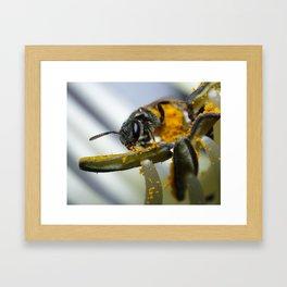 Sweat Bee on Hosta Framed Art Print