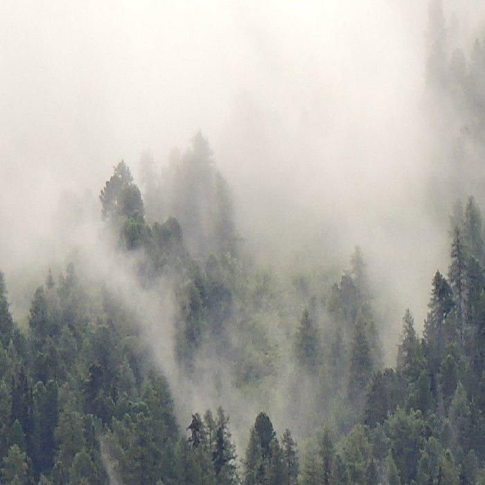Forest #evergreen # landscape photography Leggings