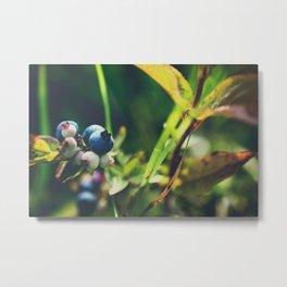 Vintage Wild Blueberries Metal Print