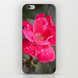 Raindrop Rose iPhone Skin