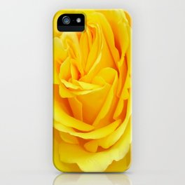 Beautiful Yellow Rose Closeup iPhone Case