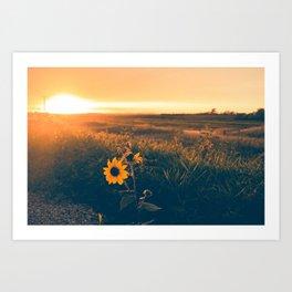Saskatchewan Harvest Sunset Art Print