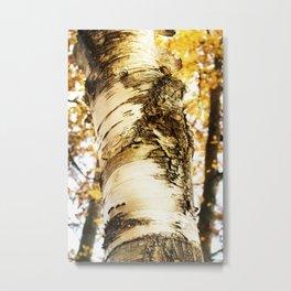 The Beautiful Birch Metal Print