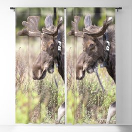 Watercolor Moose Bull 12, Rocky Mountain National Park, Stepping into View Blackout Curtain
