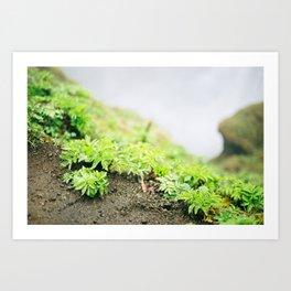 Contrasting scenery II Art Print