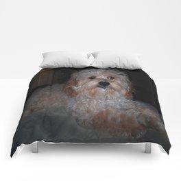 Small Dog Comforters