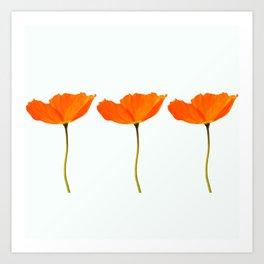 Three Orange Poppy Flowers White Background #decor #society6 #buyart Art Print