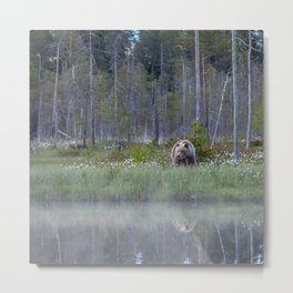 Wild brown bear and its reflection in forest creek Metal Print