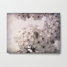 Romantic White Spring Blossoms Flowers Floral A410 Metal Print