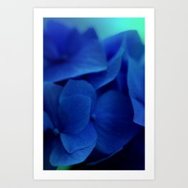 Pretty Indigo Hydrangea Flower  #decor #society6 #buyart Art Print