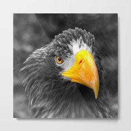 Sea Eagle  Metal Print