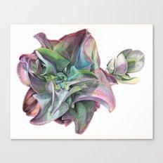 Echeveria Canvas Print