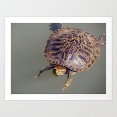 Ungainly swimmer Art Print