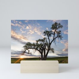 Sunset Tree Mini Art Print